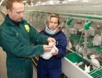 Dr. Bernhard Walker állatorvos a svájci SQTS intézettől az egyik telepvezetővel az üzem ellenőrzésekor
